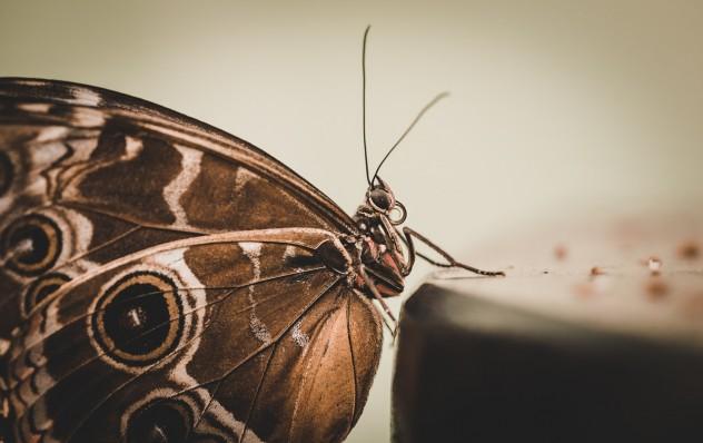 butterfly-839246_1280